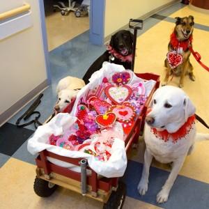 Doggie Ambassadors